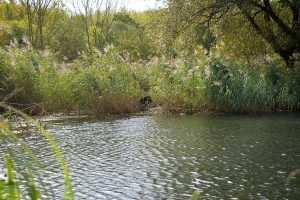 Wasserarbeit: Verlorensuchen im Schilf