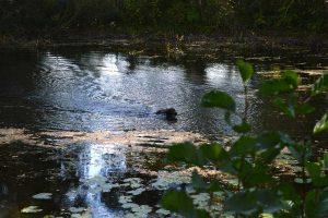 Wasserarbeit: Stöbern